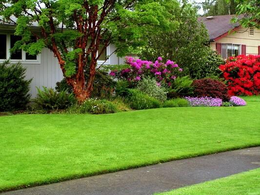Как вырастить газон в домашних условиях? -